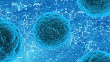 Moosmosis: Biology and Cells