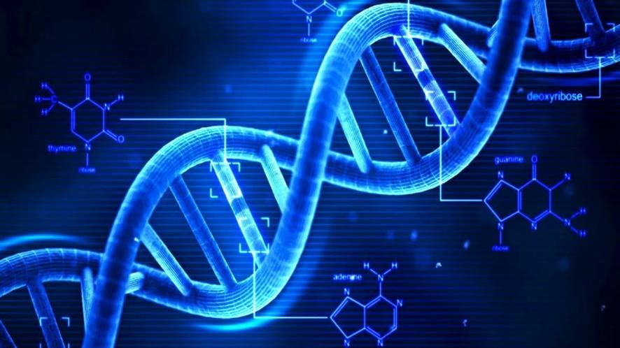 Moosmosis: Biology and DNA