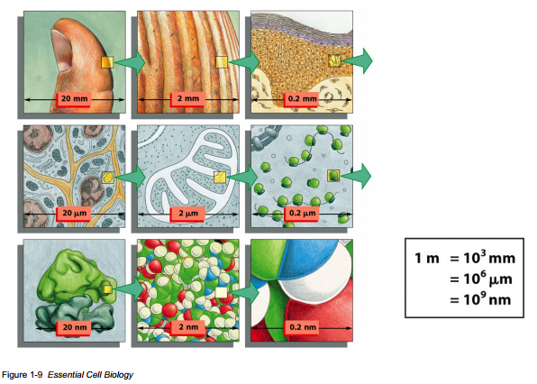 Size Scales of Cell Biology