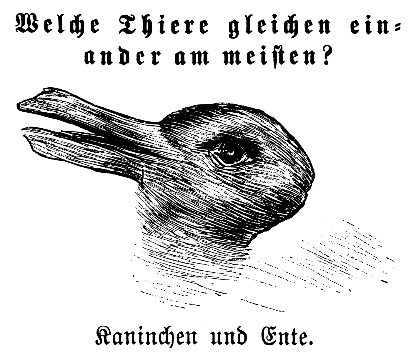 Rabbit-Duck Optical Illusion