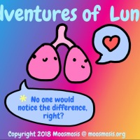Respiratory System: Differences Between the Left and Right Lung