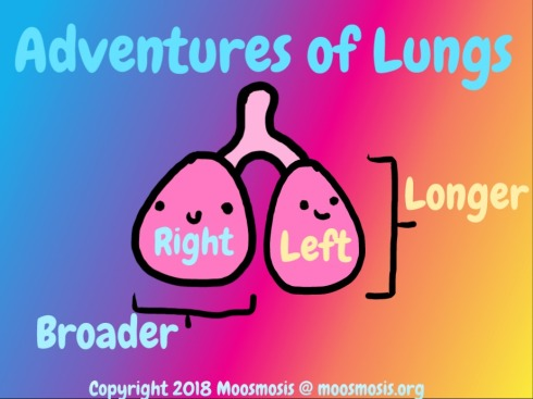 Respiratory System: Differences Between the Left and Right Lung ...