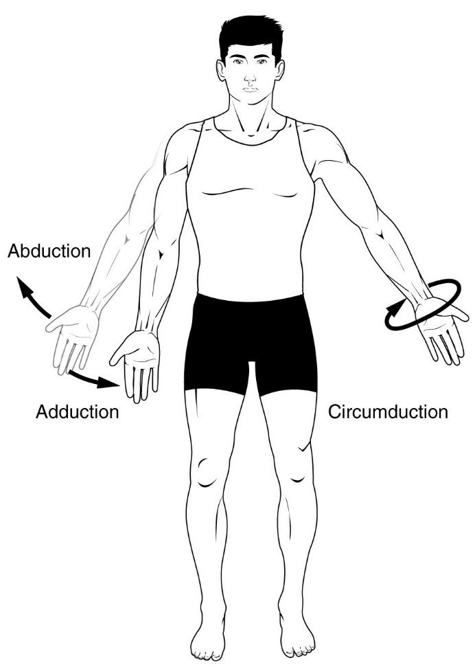 Diagram of Arm abduction, arm adduction, and arm circumduction. Notice the arm movement of the upper limb/shoulder for arm aBduction.