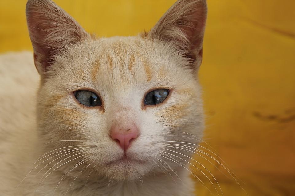 cat-2690485_960_720