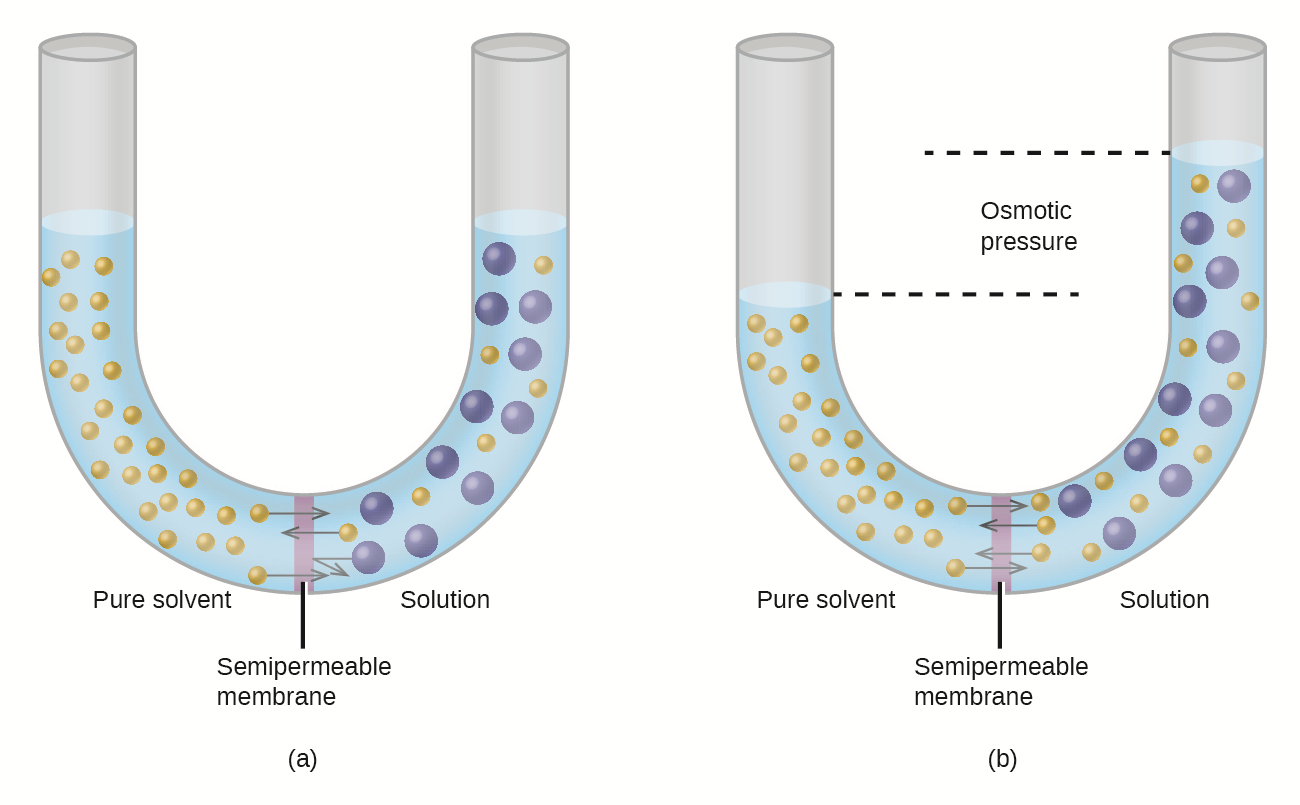CNX_Chem_11_04_osmosis