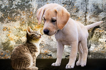 This image has an empty alt attribute; its file name is animals-dog-cat-puppy-royalty-free-thumbnail.jpg